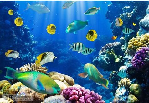 这些神奇又可爱而的海洋生物都来啦!