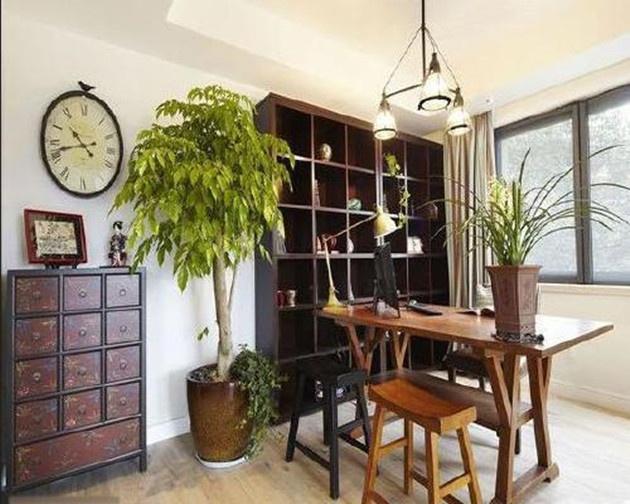书房放什么植物风水好?