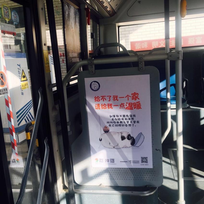 12.21郑州宠物保护协会&公交公司开展保护动物尊重生命暖冬公益活动
